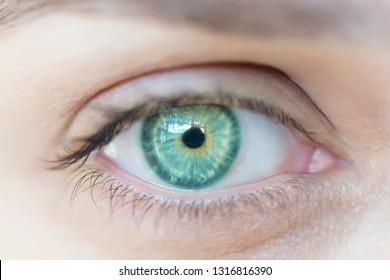 Macro image of human eye.Womens green eye