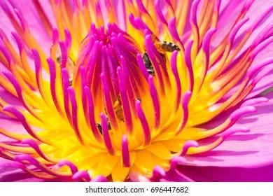 Macro image of lotus pollen