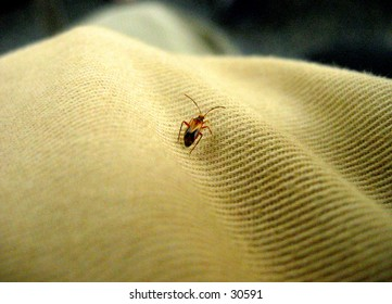 Macro image on a tinny bug on fabric