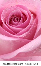 Macro image of a pink rose with droplets