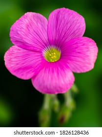 Macro image of a purple and pink flower