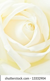 macro image of a romantic white rose.