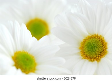 Macro image of several white daisies flowers