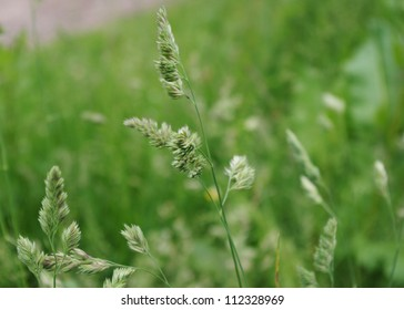 Macro image showing flower heads of grass in an English field in late Spring/early Summer