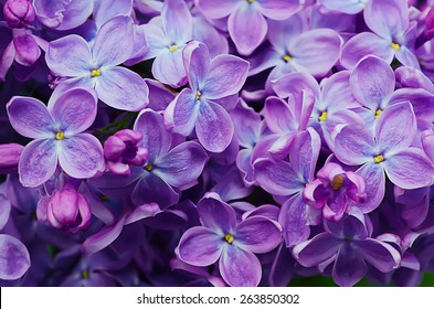 Royalty Free Purple Flowers Images Stock Photos Vectors