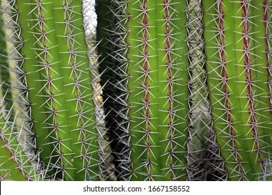 Macro image of textured surface of cactus flower in Aruba island