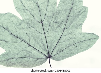 Macro image of tree leaf, natural background