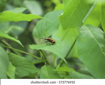 Macro of a insect on a green leaf