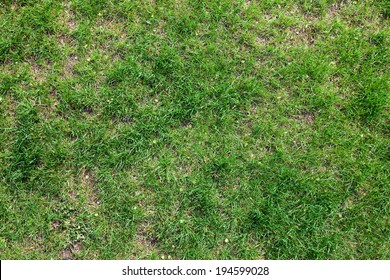 macro isolated young green lawn grass in sunlight
