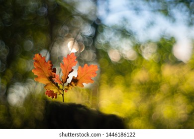 Macro landscape in backlight with a small oak tree with red leaves on bokeh background.