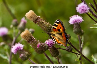 Macro landscape with small tortoiseshell