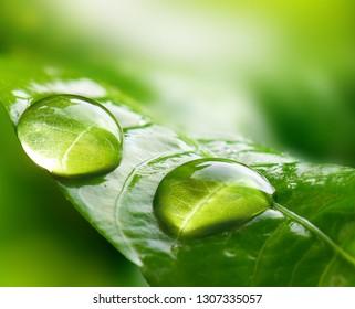 Makro Große Regentropfen auf einem Blatt im tropischen Wald.