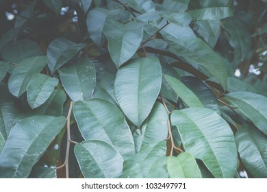 Macro leaf background