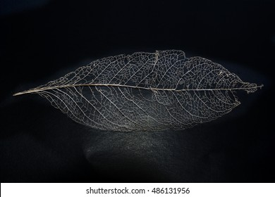 macro  of leaf skeleton