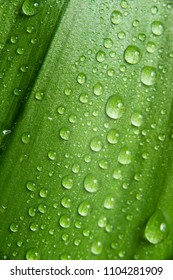 the macro leaf with water drop