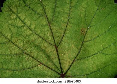 Macro leaf/Green leaf texture macro shoot/Leaf