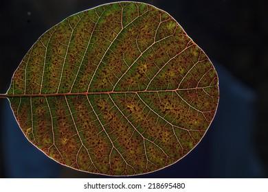 Macro leaf/Texture leaf macro shoot/Leaf
