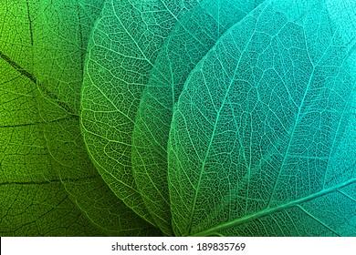 Macro Images Stock Photos Vectors Shutterstock