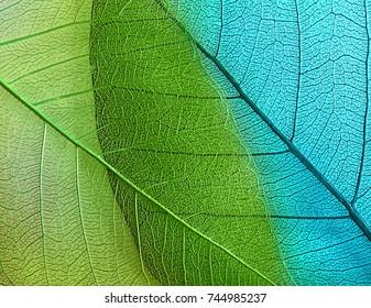 Makro-Blätter, Hintergrundstruktur
