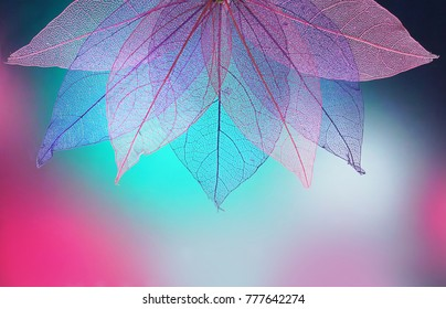Macro leaves background texture blue, turquoise, pink color. Transparent skeleton leaves. Bright expressive colorful beautiful artistic image of nature