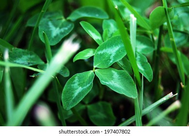 Macro leaves, natural background