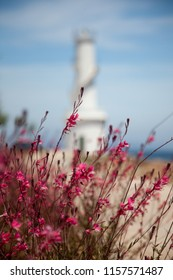Macro of Mediterranean vegetation and a blurred lighthouse in the background