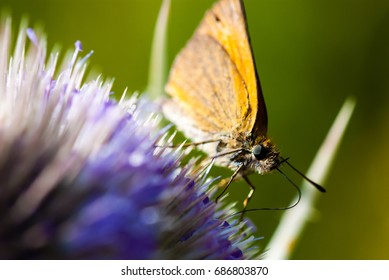 Macro of the moth when feeding on flower with nectar. Smooth green background.