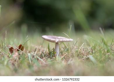 Shroom Images, Stock Photos & Vectors | Shutterstock