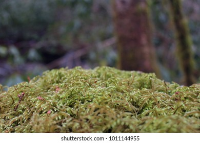 Macro Nature Photography of Moss or Lichen Covering a Stone in the Forest.