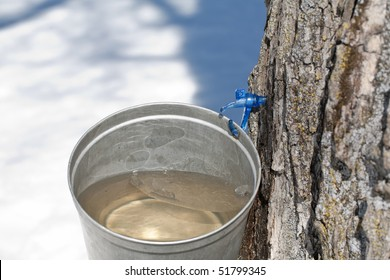 Macro of a new tap and bucket used for collecting maple sap in the early spring.