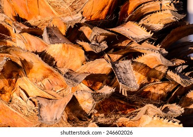 Macro of a Palm Tree Trunk Texture Background