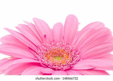 macro of a part of a pink gerbera isolated on white