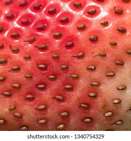 macro of a partly ripe strawberry showing the pattern, texture and color variation of the seeds and skin