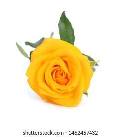 Macro of Perfect Orange Rose Flow on white