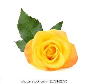 Macro of Perfect Yellow Rose Flow