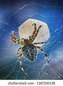 macro photo of a backlit spider