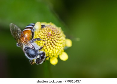 macro photo of a beautiful hony bee and flowers a sunny day.