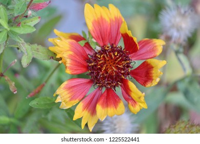 Macro photo of beautiful red and yellow flower.