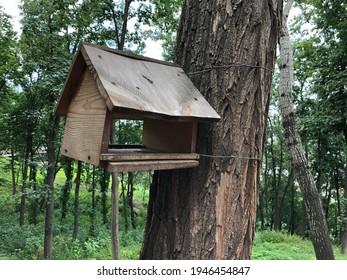 Macro photo bird feeders in forest. Stock photo bird feeders on tree outdoor