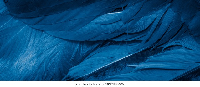 macro photo of blue hen feathers. background or textura - Shutterstock ID 1932888605