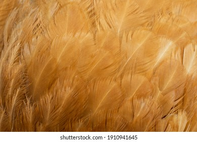 macro photo of brown hen feathers. background or textura - Shutterstock ID 1910941645