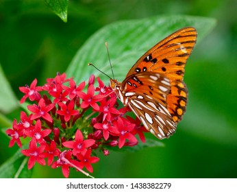 Macro photo of butterfly on flower on warm summer day.