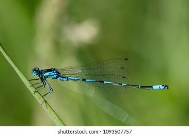 Macro photo of a dragonfly. (waterjuffer)