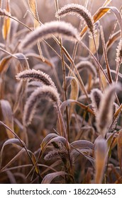 Macro photo of a field grass with frost. The grass is covered with frost. Frozen grass background. Vertical frame.