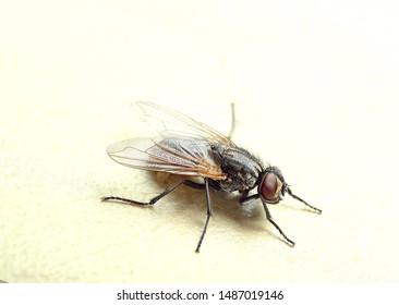 macro photo fly on white background