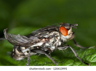 Macro photo of a fly sitting on a leaf