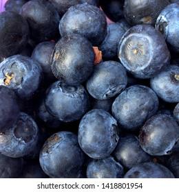 Macro Photo food blueberries berries. Texture pattern background of round blue blueberry berries. Image fresh berries blueberries