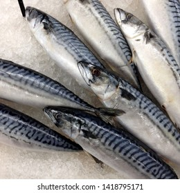 Macro Photo food fresh mackerel fish. Texture background sea fish mackerel. Image of food mackerel fish lying on ice.