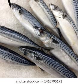Macro Photo food fresh mackerel fish. Texture background sea fish mackerel. Image of food mackerel fish lying on ice.