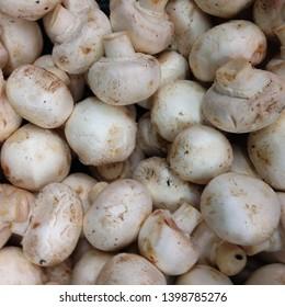 Macro photo food product vegetable mushrooms champignons. Texture white mushrooms champignons.